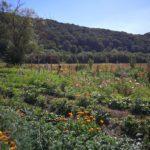 Les Jardins d'Hamptia