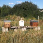 hamptia-ruche1
