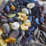 graines potagères