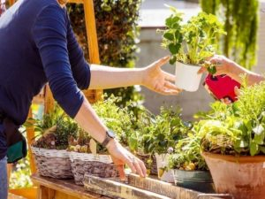 donnerie jardinage